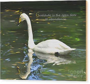 Whooper Swan Gratitude Wood Print by Diane E Berry