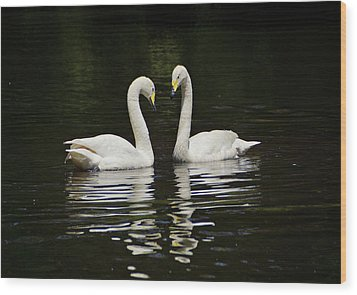 Wood Print featuring the photograph Whooper Swans by Sandy Keeton