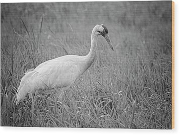 Whooping Crane 2017-4 Wood Print by Thomas Young