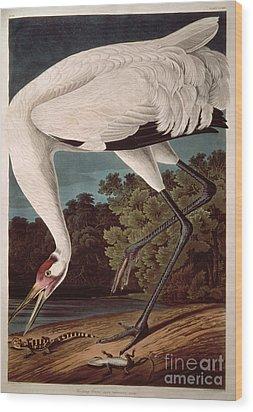 Whooping Crane Wood Print by John James Audubon