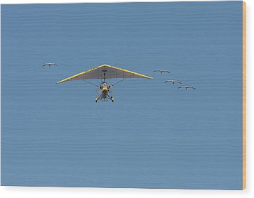 Whooping Cranes And Operation Migration Ultralight Wood Print