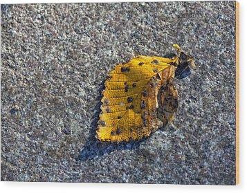 Why We Call It Fall Wood Print by Robert Ullmann