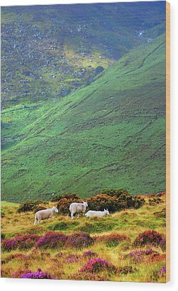 Wood Print featuring the photograph Wicklow Pastoral by Jenny Rainbow