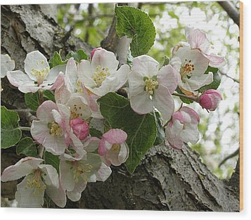 Wood Print featuring the photograph Wild Apple Blossoms by Angie Rea