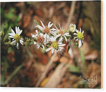 Wood Print featuring the photograph Wild Astors by Donna Brown