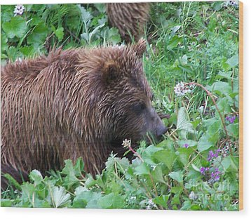 Wild Bear Eating Berries  Wood Print