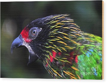 Wild Bird Wood Print by David Lee Thompson