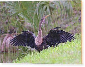 Wood Print featuring the photograph Wild Birds - Anhinga by Kerri Farley