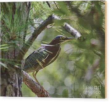 Wood Print featuring the photograph Wild Birds - Green Heron Tries To Hide by Kerri Farley