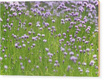 Wild Chives Wood Print by Chevy Fleet