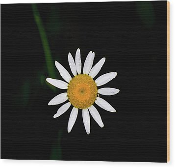 Wood Print featuring the digital art Wild Daisy by Chris Flees