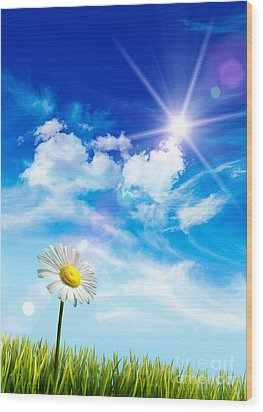 Wild Daisy In The Grass Against Bleu Sky Wood Print by Sandra Cunningham