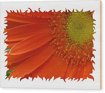 Wood Print featuring the photograph Wild Daisy by Shari Jardina