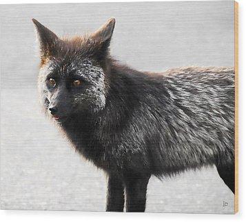 Wild Eyes Wood Print by David Lee Thompson