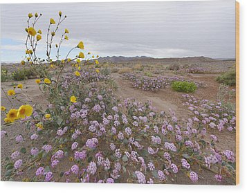 Wood Print featuring the photograph Wild Flowers In Death Valley by Dung Ma