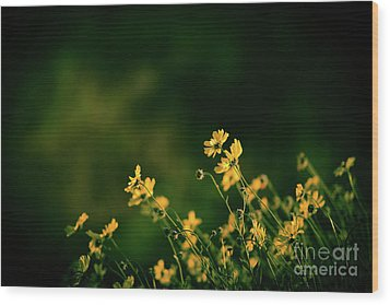Wood Print featuring the photograph Evening Wild Flowers by Kelly Wade