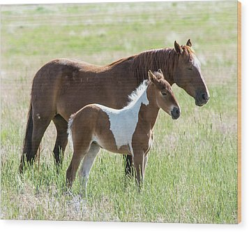 Wood Print featuring the photograph Wild Foal With A Horse Pattern  by Mary Hone