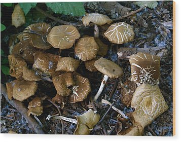 Wild Forest Mushroom Patch Wood Print by Sonja Anderson