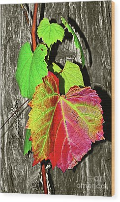 Wood Print featuring the photograph Wild Grape Vine By Kaye Menner by Kaye Menner