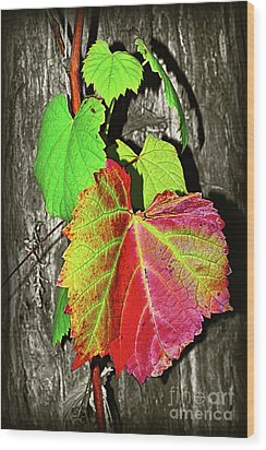 Wood Print featuring the photograph Wild Grape Vine II By Kaye Menner by Kaye Menner