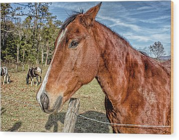 Wild Horse In Smoky Mountain National Park Wood Print