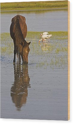 Wild Horse Reflection Wood Print