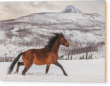 Wild Horse Wood Print by Todd Klassy