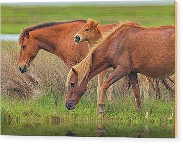 Wild Horses Of Assateague Island Wood Print by Rick Berk