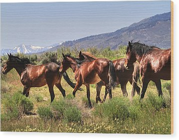 Wild Horses Of Nevada Wood Print by Donna Kennedy