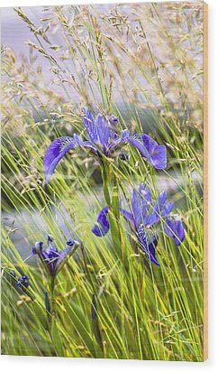 Wild Irises Wood Print by Marty Saccone