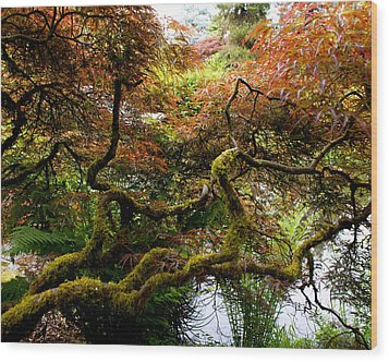 Wild Japanese Maple Wood Print by Sonja Anderson