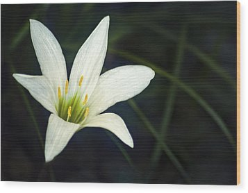 Wild Lily Wood Print by Carolyn Marshall