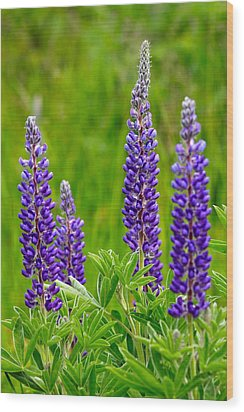 Wild Lupine Wood Print by Karon Melillo DeVega