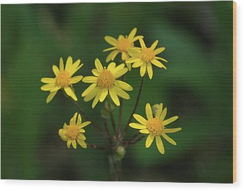 Wood Print featuring the photograph Wild Meadow Daisies by LeeAnn McLaneGoetz McLaneGoetzStudioLLCcom