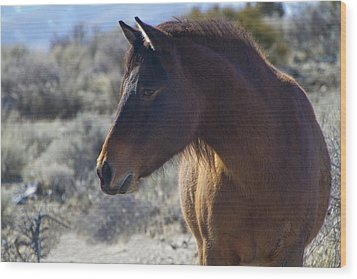 Wild Mustang Mare Wood Print