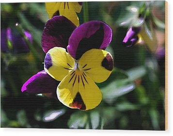 Wild Pansy Wood Print by Don  Wright