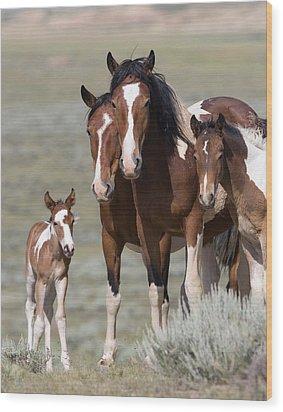 Wild Pinto Family Wood Print by Carol Walker