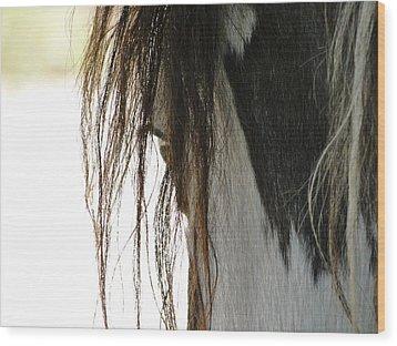 Wild Pinto Mustang Wood Print