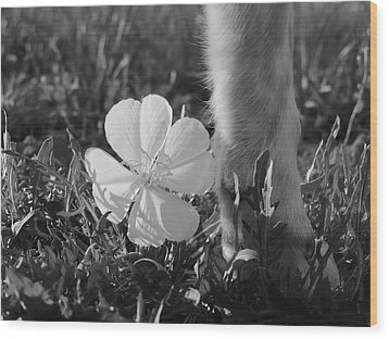 Wild Primrose With Dog's Foot Wood Print