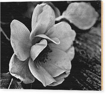 Wild Rose And Salvaged Barn Wood Wood Print by Curtis J Neeley Jr