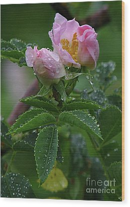 Wild Rose Buds Wood Print by Deborah Johnson