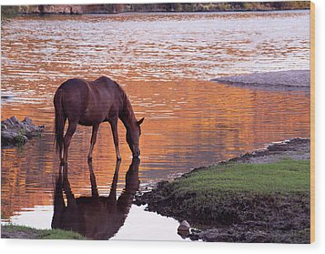Wild Salt River Horse At Saguaro Lake Wood Print