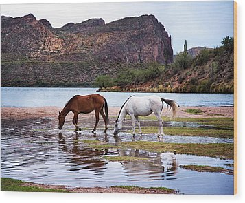 Wood Print featuring the photograph Wild Salt River Horses At Saguaro Lake Arizona by Dave Dilli