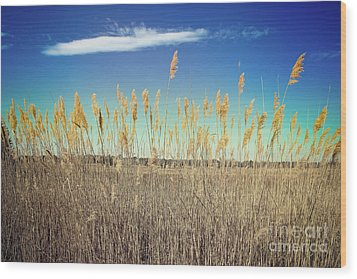 Wood Print featuring the photograph Wild Sea Oats by Colleen Kammerer