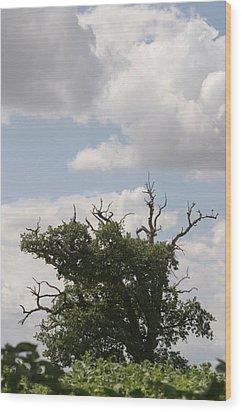 Wild Sky Wood Print by Dagmar Batyahav