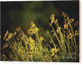 Wood Print featuring the photograph Wild Spring Flowers by Kelly Wade