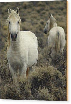 Wild Stallion Wood Print by Marty Koch