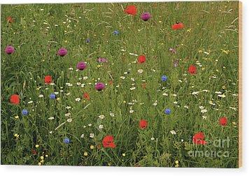Wild Summer Meadow Wood Print