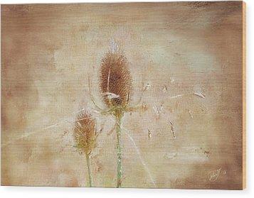 Wild Teasel Wood Print