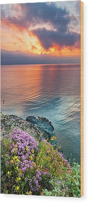 Wild Thyme By The Sea Wood Print by Evgeni Dinev